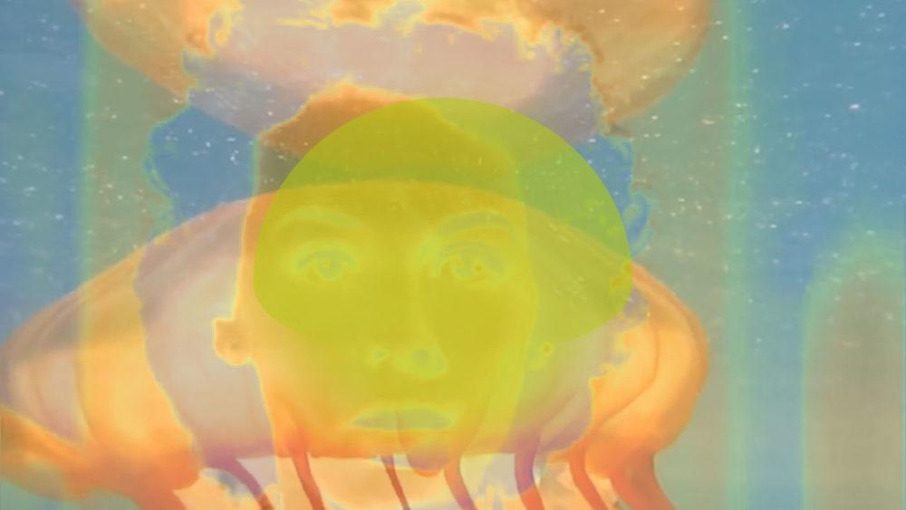 translucent jellyfish