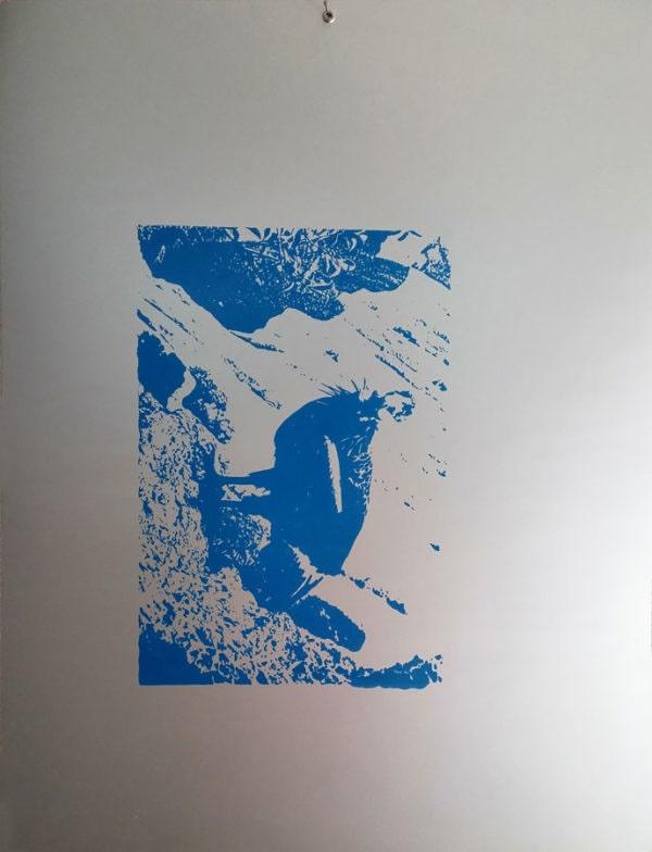 endangered-animals-condor-silkscreen-50x65cm-1996-2015-rizzo